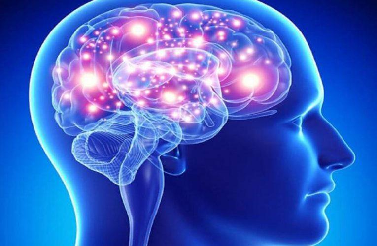 پروتئینی که به حفظ تعادل مغز کمک میکند