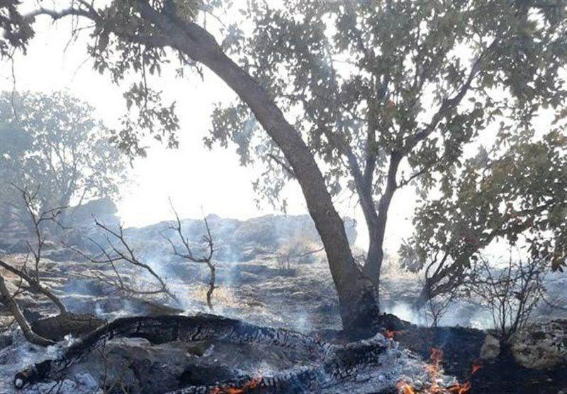 شناسایی عاملان آتشسوزی جنگلهای کوهدشت؛ ۵ نفر دستگیر شدند
